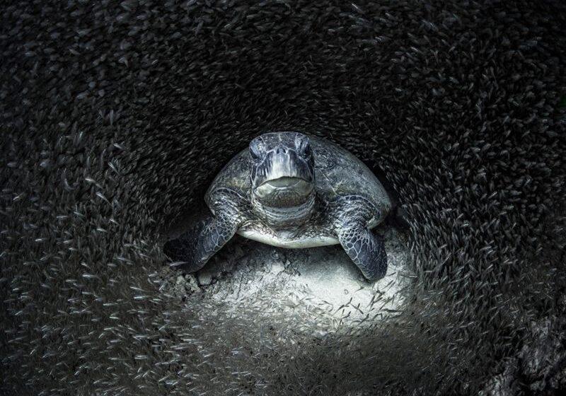 Las mejores fotos del océano de 2021